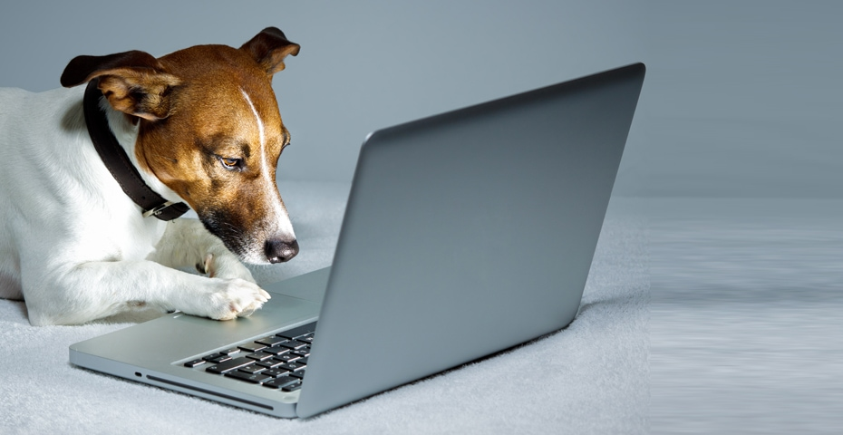 Veterinarian Guide to Everything Online Marketing