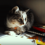 Veterinarians and search engines